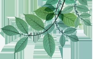 natcore-green-technology
